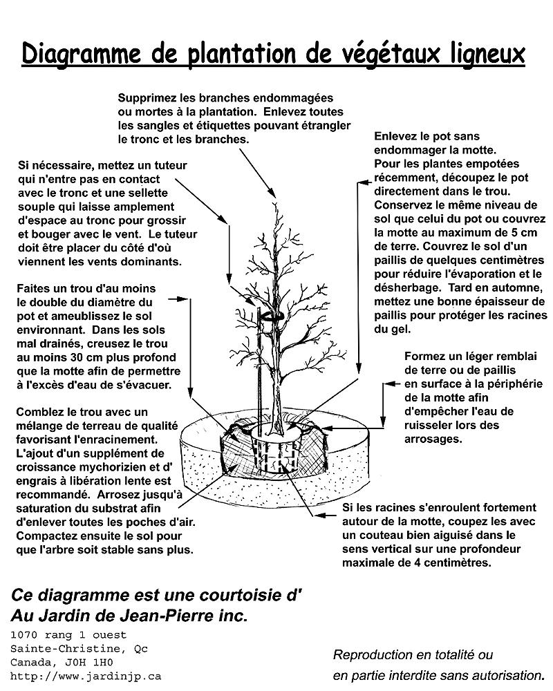 Comment Planter Un Arbre, Un Conifère Ou Un Arbuste